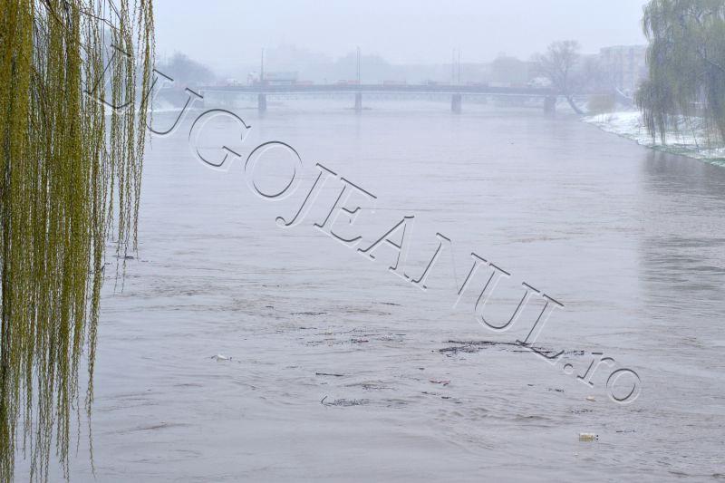 autoritati alerta timisul s-a umflat inundatii pericol bega balint bodo manastiur lugojeanul 2013 (3)