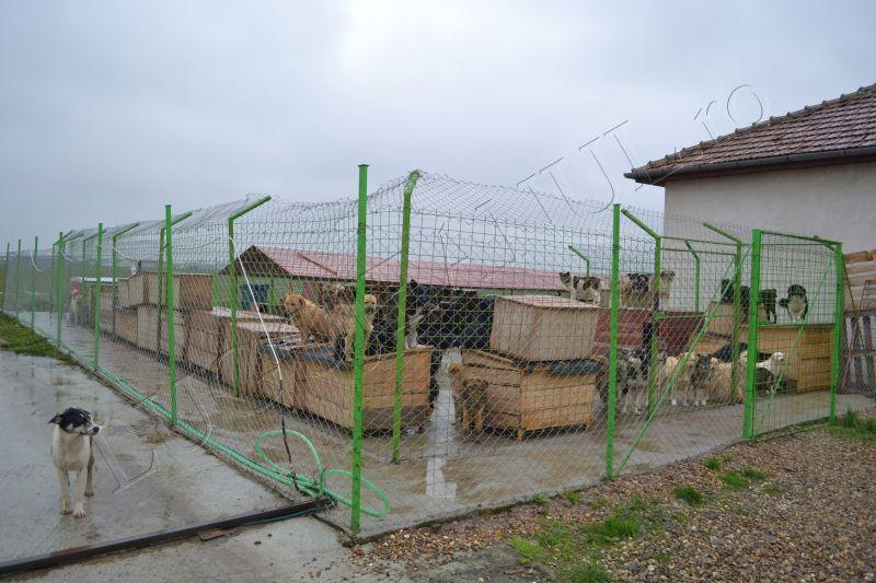 asociatia free amely 2007 ziua internationala a cainilor fara adapost 4 aprilie adopta un caine lugojeanul 2013