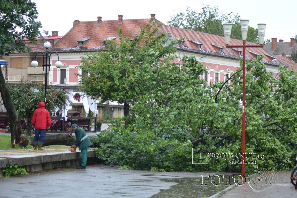 pom-cazut-lugoj-grindina-copaci-dezastru-furtuna-26-mai-2013-foto-galerie-taifas-lugojeanul-2