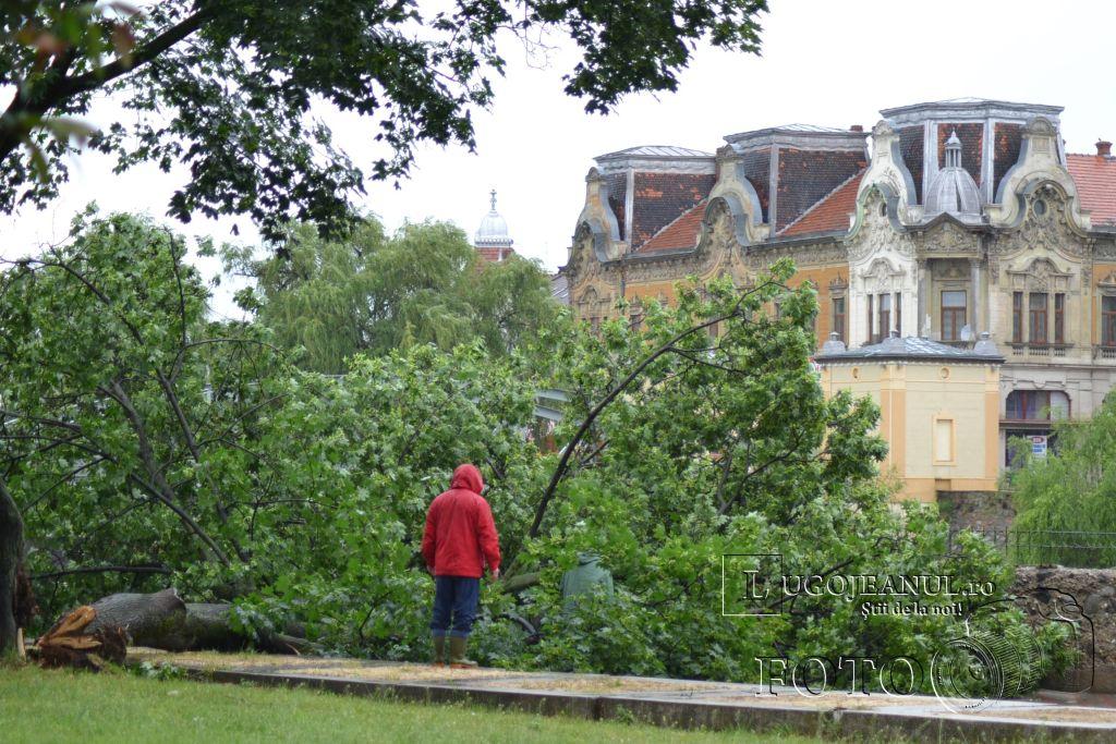 pom-cazut-lugoj-grindina-copaci-dezastru-furtuna-26-mai-2013-foto-galerie-taifas-lugojeanul-5