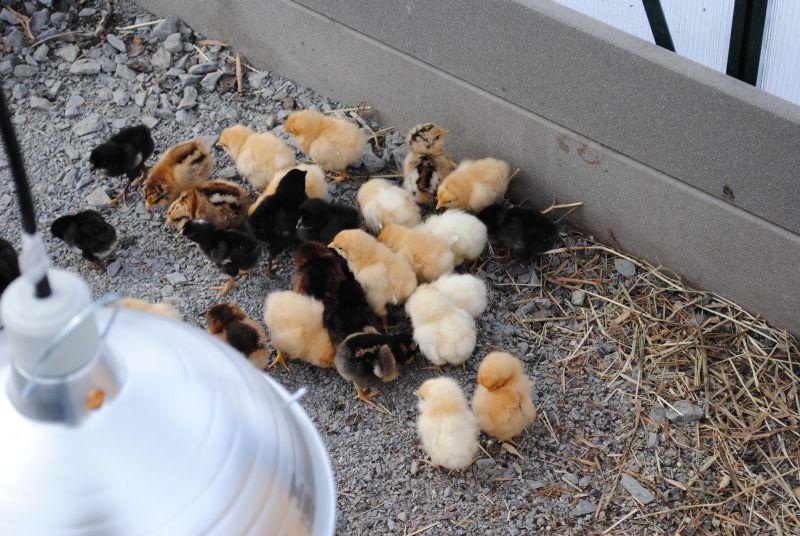 pui si furaje hrana pentru animale firma din lugoj prejudiciu 1 milion lei noi stat lugojeanul 2013 foto informativ