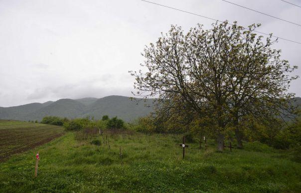 cimitir-pe-autostrada-5