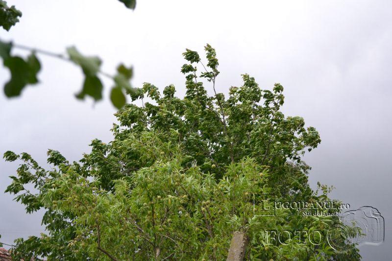 furtuna ploaie vant puternic descarcari electrice grindina vremea meteo vreme lugoj foto lugojeanul 2014 iunie