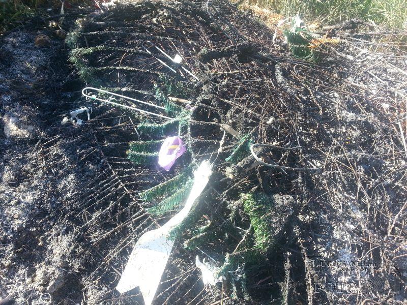 coroane incendiate si sticle de bere in cimitir costeiu petrecere in toiul noptii foto galerie lugojeanul 2014 (3)