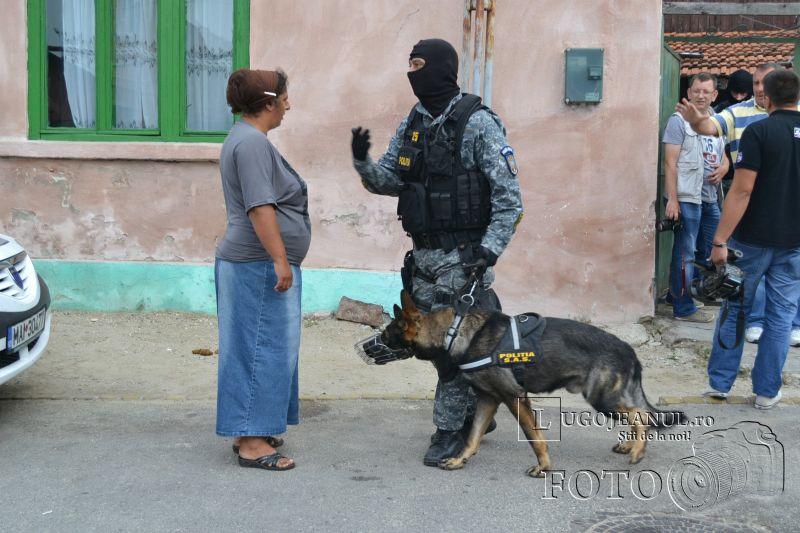 mascatii lugoj perchezitie trafic tigari tutun piata romi foto galerie politia timis lugojeanul 2014 (5)