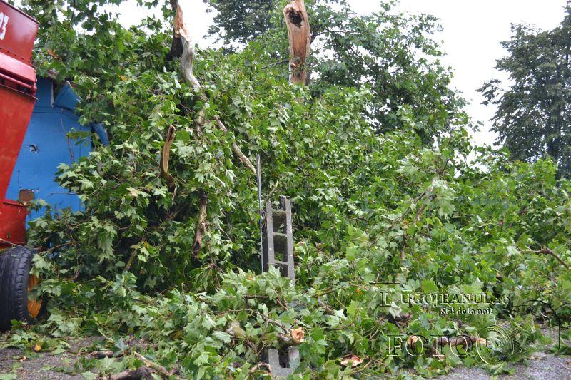 rupere de nori vijelie grindina lugoj pompieri pomi rupti copaci cazuti strada interventie 112 foto galerie 2014 lugojeanul (1)