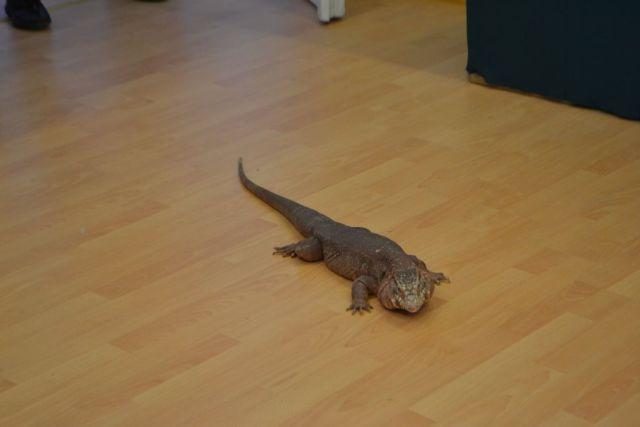 pisoi catel expo reptile vii lugoj muzeu