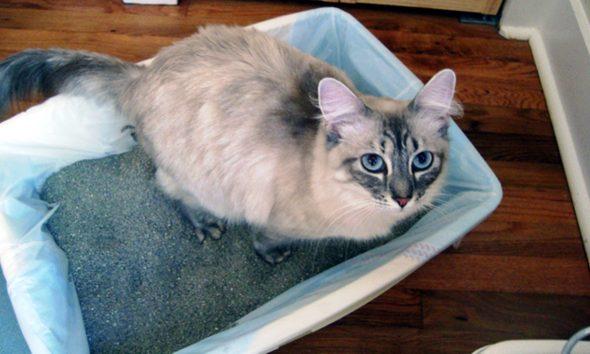 pisici-lugoj-nisip